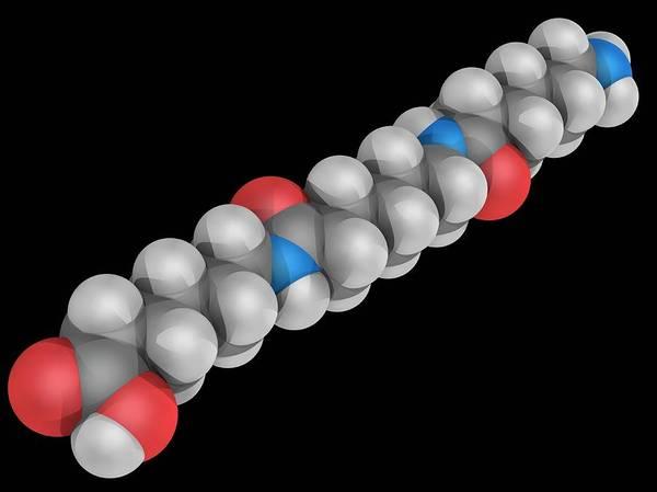 Wall Art - Photograph - Nylon Molecule by Laguna Design/science Photo Library