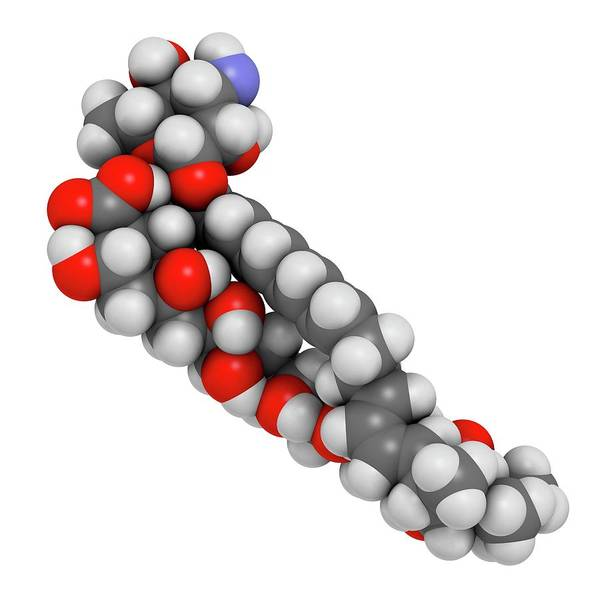 Infection Wall Art - Photograph - Nystatin Antifungal Drug Molecule by Molekuul