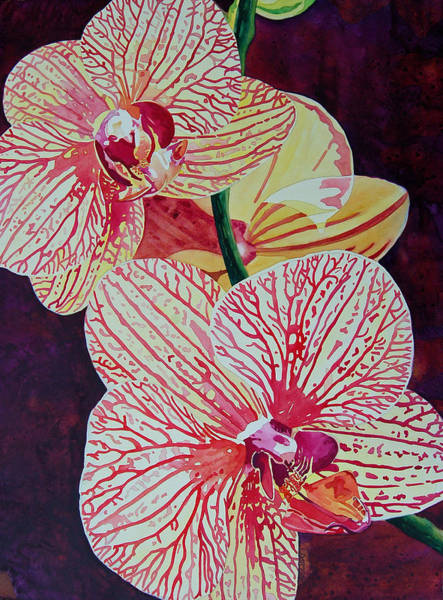 Painting - Orchids by Terry Holliday