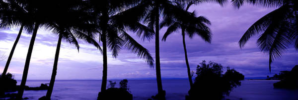 Colombian Wall Art - Photograph - Palm Trees On The Coast, Colombia by Panoramic Images