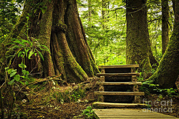 Hemlock Photograph - Path In Temperate Rainforest by Elena Elisseeva