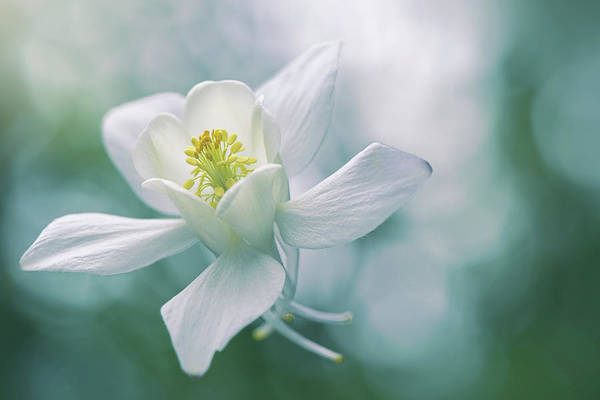 Purity Art Print by Jacky Parker