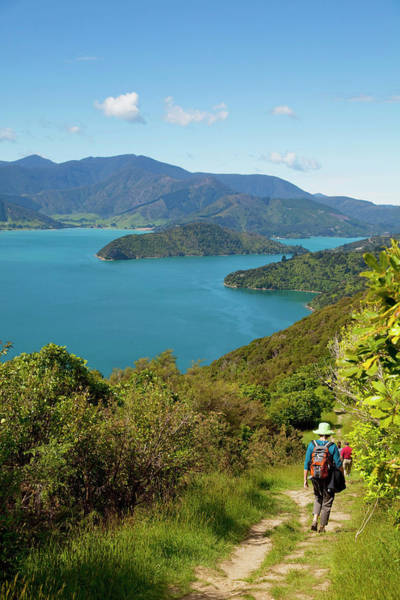 Queen Charlotte Sound Wall Art - Photograph - Queen Charlotte Track, Marlborough by Douglas Peebles