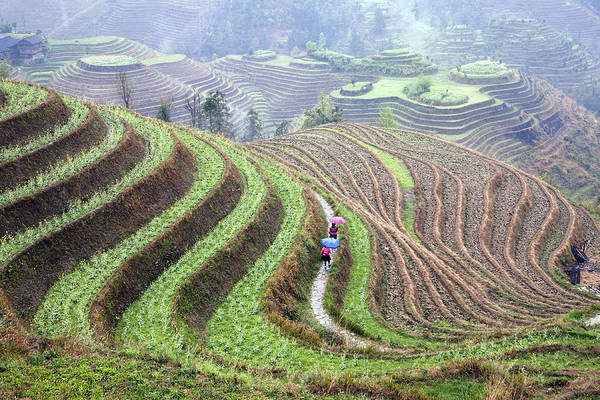 Farms Photograph - Rice Terraces by King Wu