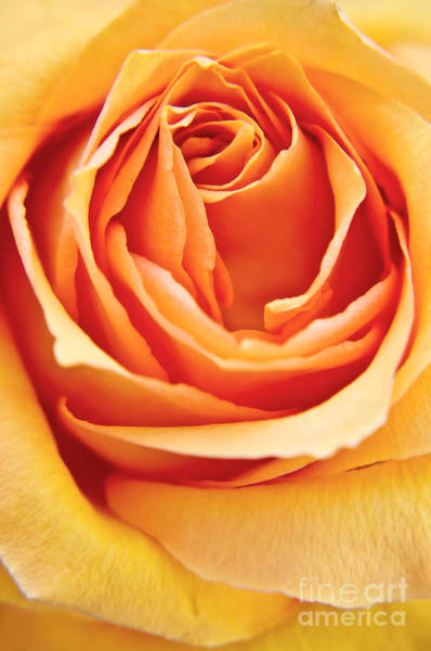 Photograph - Rose  by Angela Doelling AD DESIGN Photo and PhotoArt