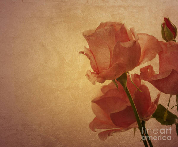 Rose Bud Digital Art - Roses by Jelena Jovanovic