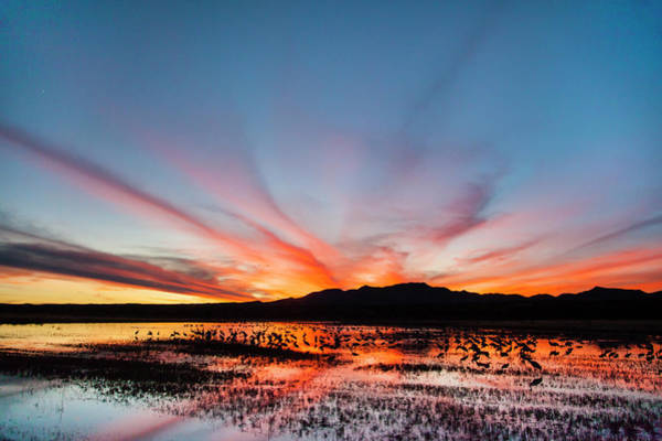 Bosque Del Apache Photograph - Sandhill Crane (grus Canadensis by Larry Ditto