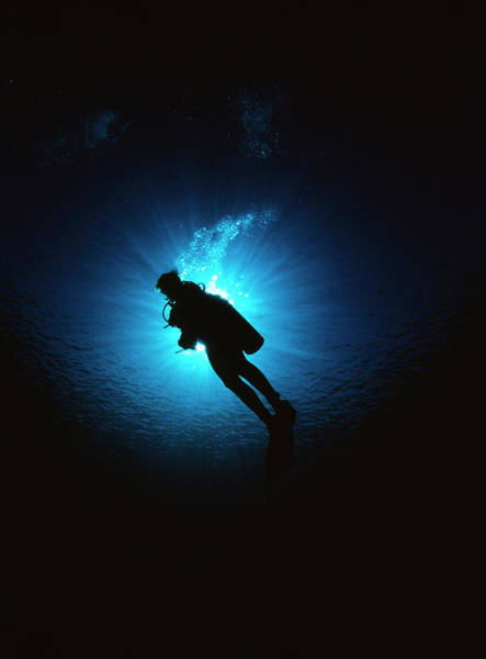 Wall Art - Photograph - Scuba Diver by Matthew Oldfield/science Photo Library