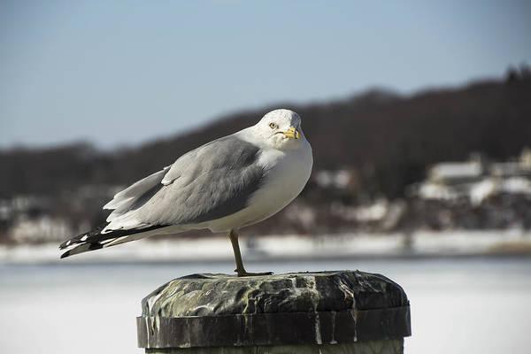 Photograph - Seagull by Susan Jensen