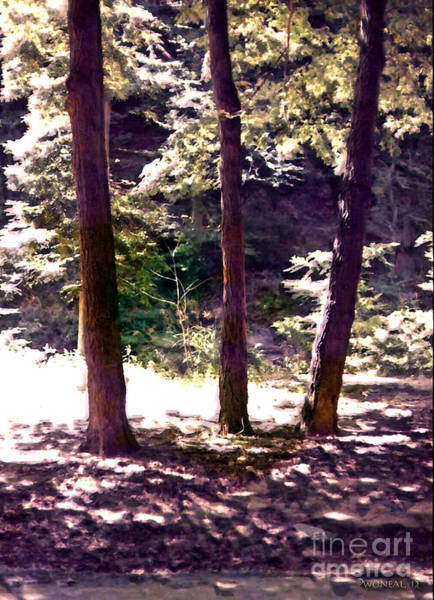 Photograph - '3 Sisters' In Rock Creek Park by Walter Neal