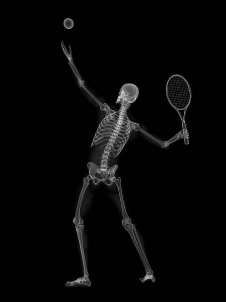 Wall Art - Photograph - Skeleton Playing Tennis by Sciepro/science Photo Library