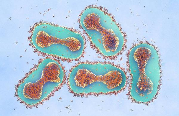 Photograph - Smallpox Virus by Chris Bjornberg