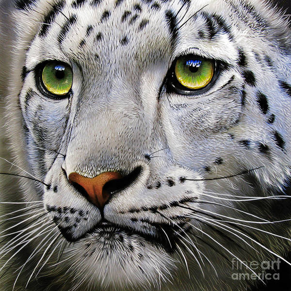 Big Cat Wall Art - Painting - Snow Leopard by Jurek Zamoyski