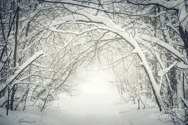 Photograph - Snowy Winter Path In Forest by Elena Elisseeva