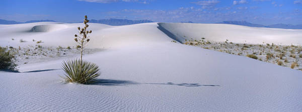 Yucca Elata Wall Art - Photograph - Soaptree Yucca In Gypsum Dunes White by Konrad Wothe