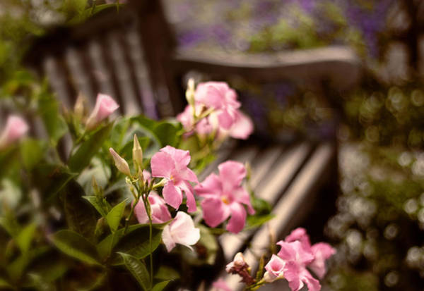Respite Photograph - Spring Repose by Jessica Jenney