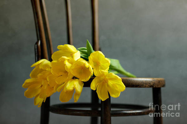 Bright Photograph - Still Life With Yellow Tulips by Nailia Schwarz