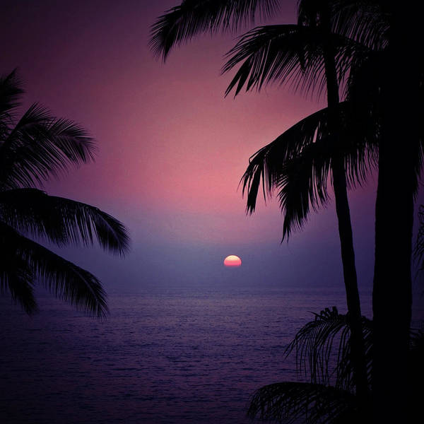 Photograph - Sultry Sunset by Natasha Marco