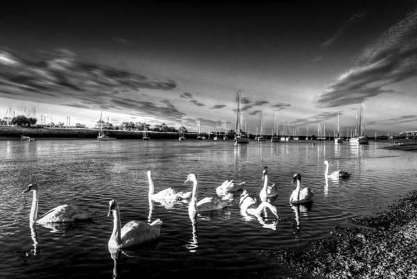 Swan Boats Photograph - Summer Evening Swans by David Pyatt
