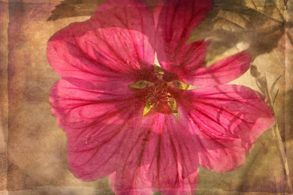 Impression Mixed Media - Summer Impressions by Heike Hultsch