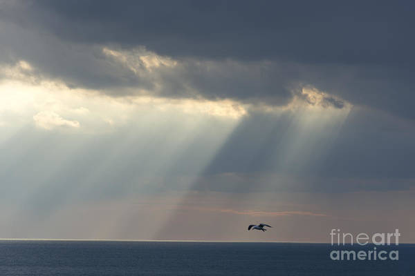 Sestri Levante Photograph - Sunlight Over The Sea by Mats Silvan