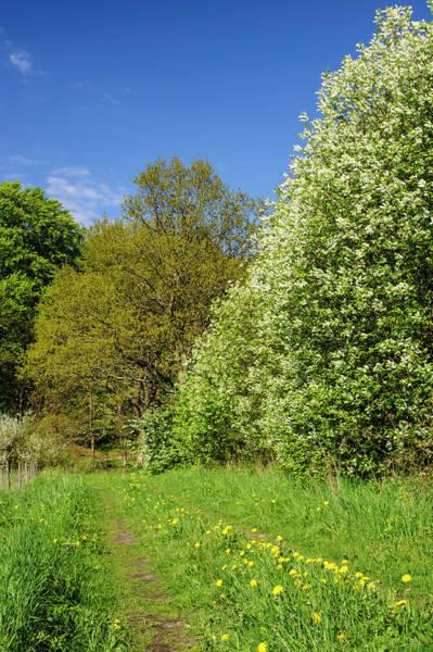 Skane Photograph - Sweden, Skane, Drakamollan Nature by Fredrik Norrsell