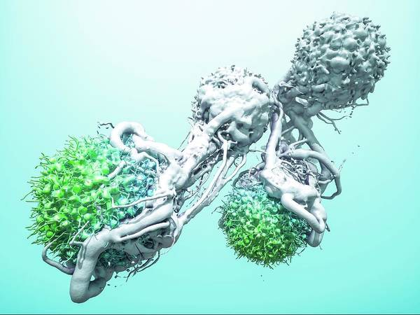 Neoplasm Photograph - T Cells Attacking Cancer Cells by Maurizio De Angelis