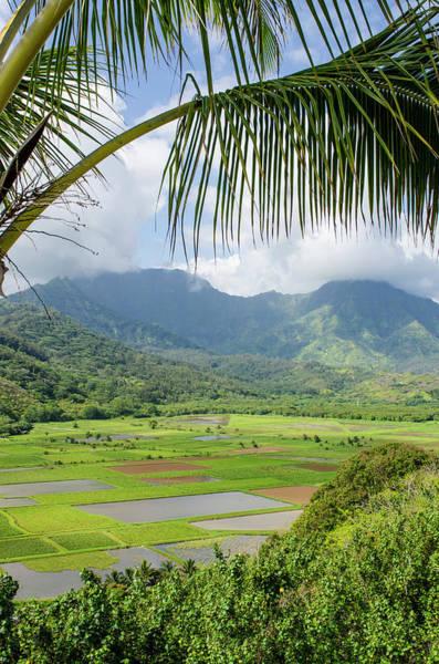 Polynesian Photograph - Taro Fields In Hanalei National by Michael Defreitas