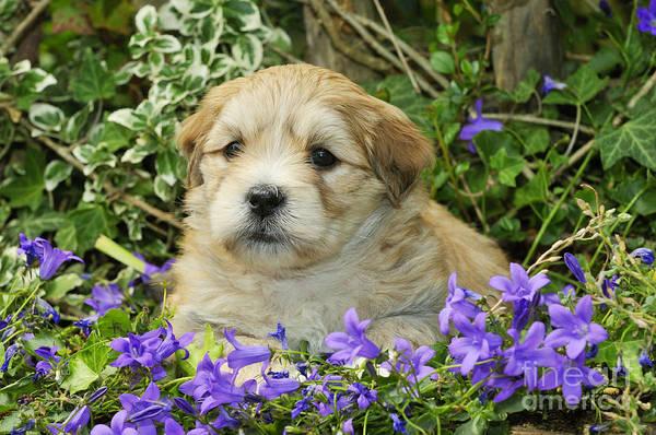 Photograph - Teddy Bear Puppy Dog by John Daniels
