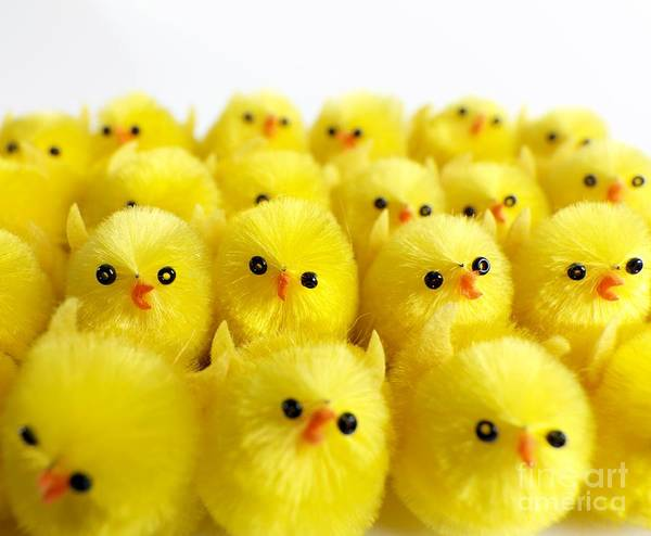 Photograph - Toy Chicks by Tek Image