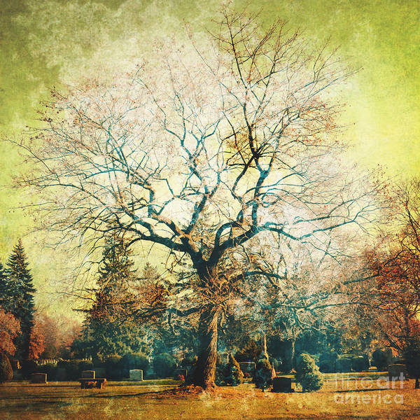 Iphoneography Wall Art - Photograph - Tree by HD Connelly
