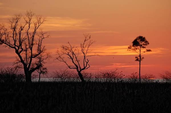 Wall Art - Digital Art - 3 Tree Sunset by Michael Thomas