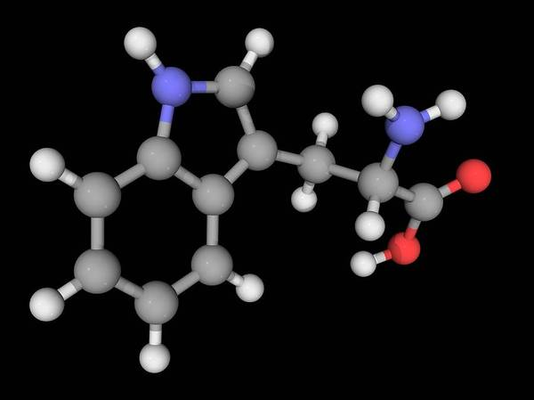 Wall Art - Photograph - Tryptophan Molecule by Laguna Design/science Photo Library