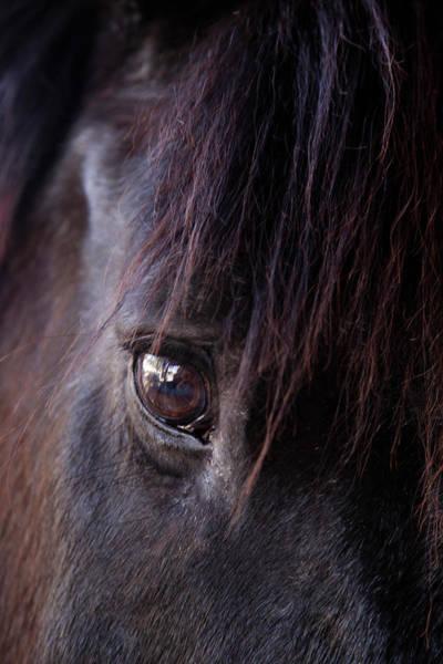 Working Animals Photograph - Tucson, Arizona, United States by Julien Mcroberts