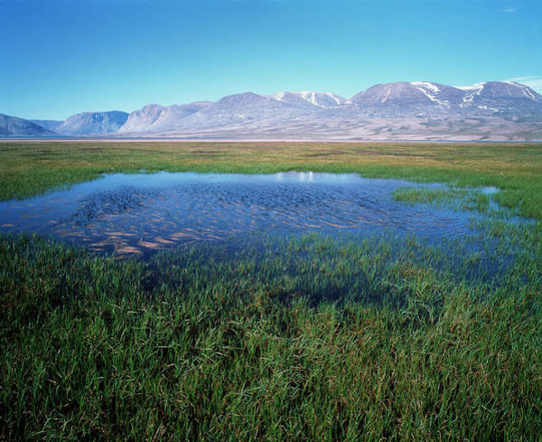 Tundra Wall Art - Photograph - Tundra Pond by Simon Fraser/science Photo Library