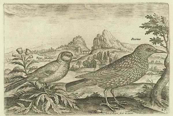Starlings Drawing - Two Birds In A Landscape, Adriaen Collaert by Adriaen Collaert