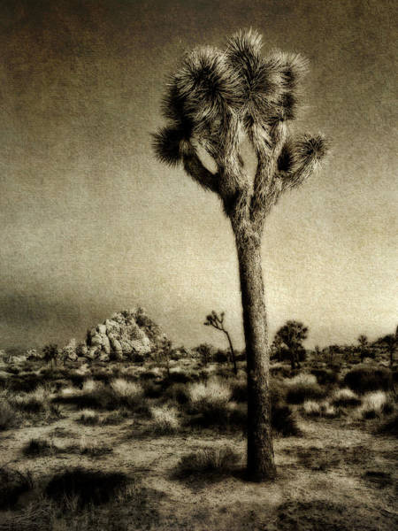 Wall Art - Photograph - Usa, California, Joshua Tree National by Ann Collins