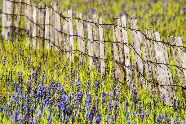 Fairfield Photograph - Usa, Idaho, Fairfield, Camas Prairie by Terry Eggers