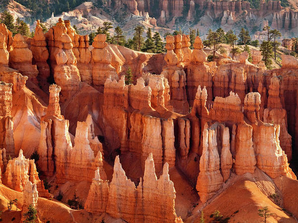 Collins Photograph - Usa, Utah, Bryce Canyon National Park by Ann Collins