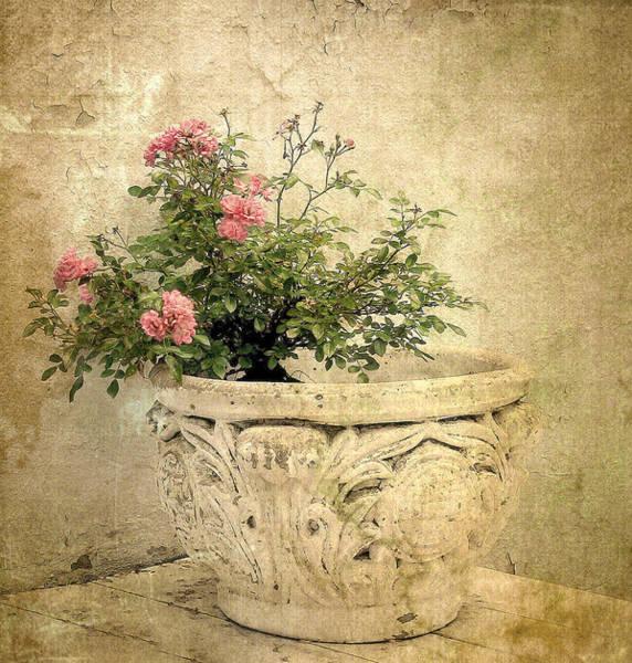 Urn Photograph - Vintage Blossom by Jessica Jenney