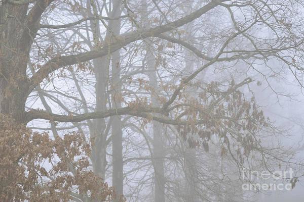 Photograph - White Oak Tree In Fog by Thomas R Fletcher