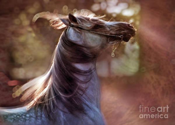 Crazy Horse Photograph - Wild At Heart by Angel Ciesniarska