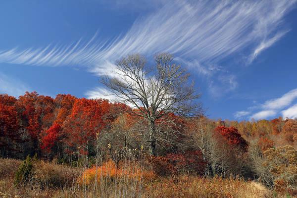 Photograph - Windswept by Jennifer Robin