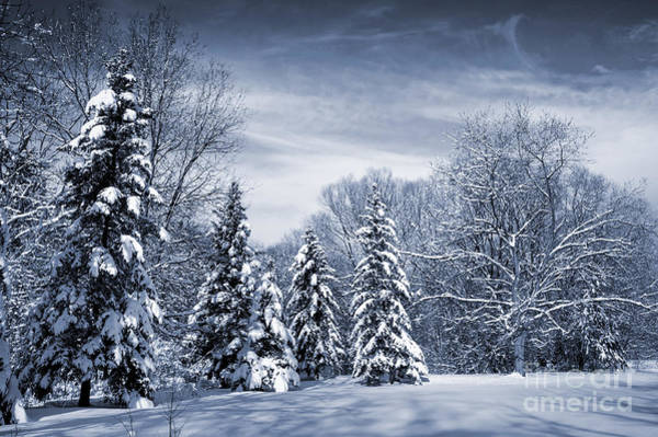 Wall Art - Photograph - Winter Forest by Elena Elisseeva