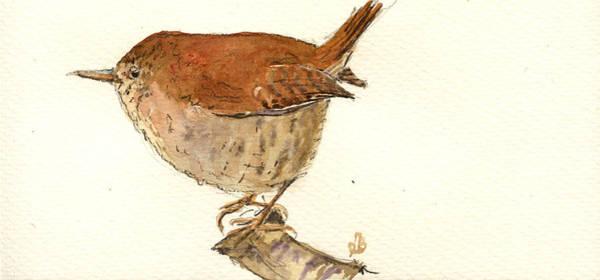 Wren Painting - Wren Bird by Juan  Bosco