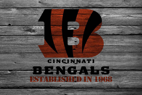Bengals Photograph - Cincinnati Bengals by Joe Hamilton