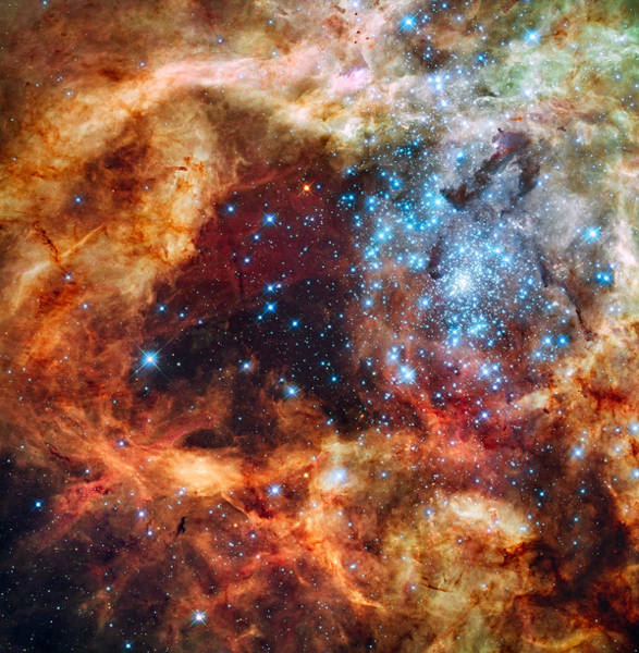 Photograph - 30 Doradus Nebula, Star-forming Region by Science Source