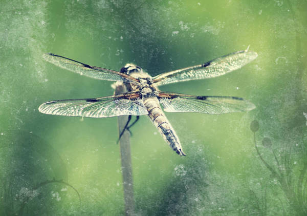 Pool Mixed Media - Dragonfly by Heike Hultsch