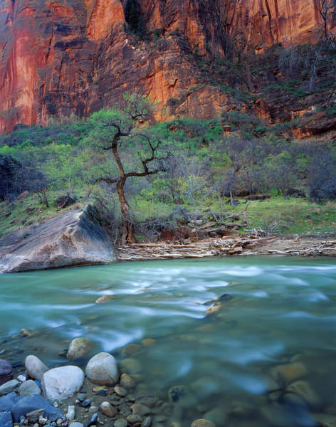 Untamed Photograph - Zion National Park, Utah by Scott T. Smith