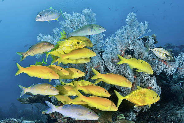 Trevally Photograph - Indonesia, Papua, Raja Ampat by Jaynes Gallery